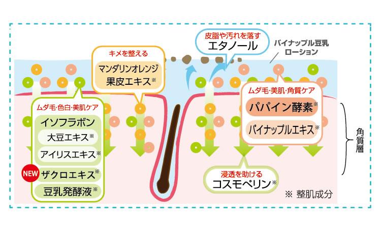 化粧水浸透成分の説明